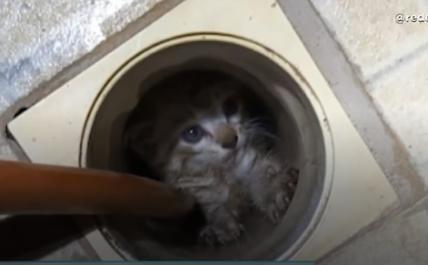 Gatinho fica preso dentro de ralo de casa em Varginha