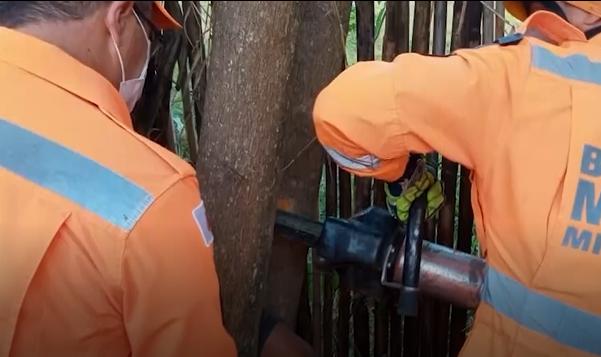 Itajubá: bombeiros resgatam criança presa em árvore