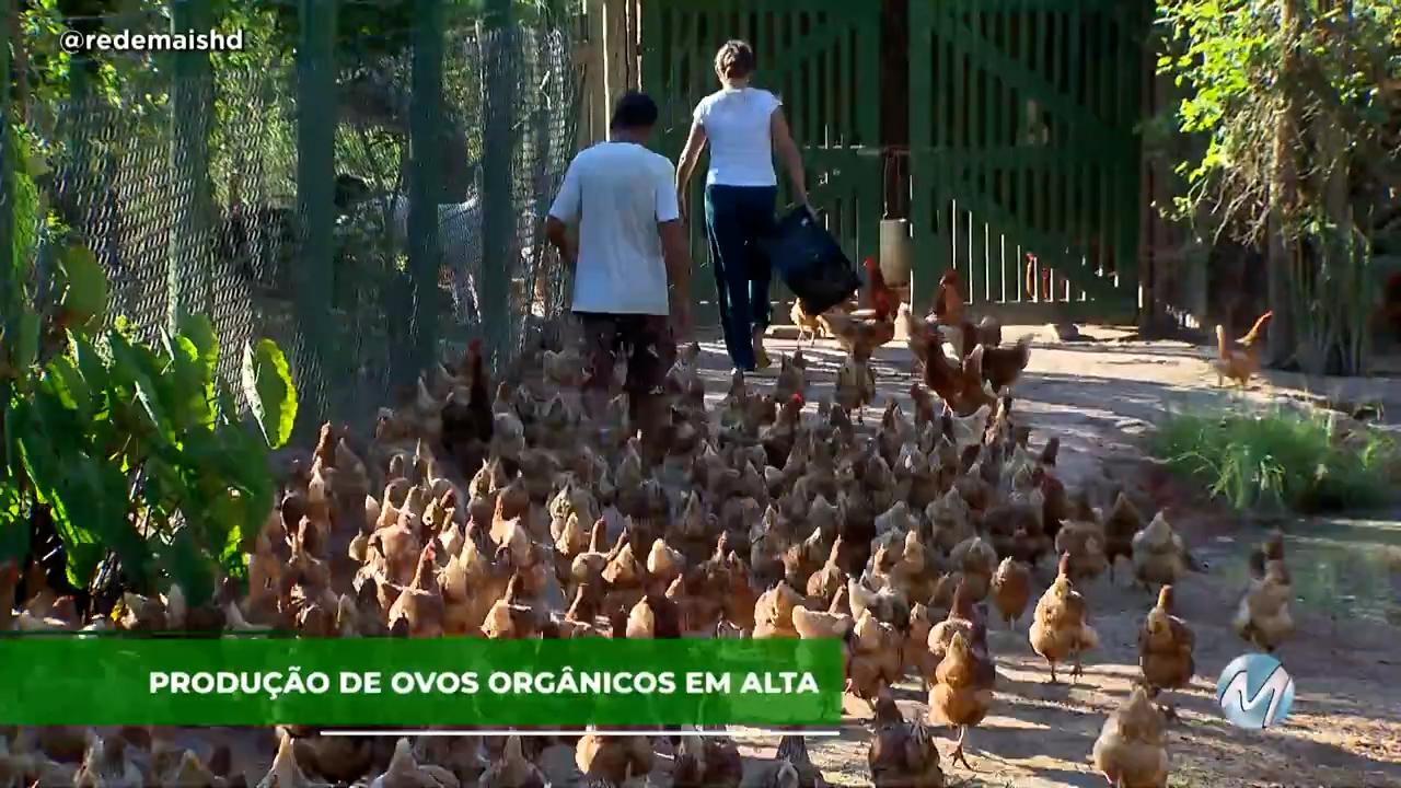Sistema caipira: produção de ovos orgânicos em alta