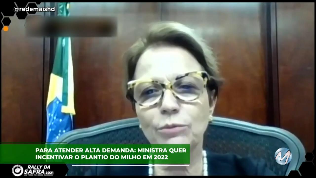 Para atender alta demanda: Ministra quer incentivar o plantio do milho em 2022