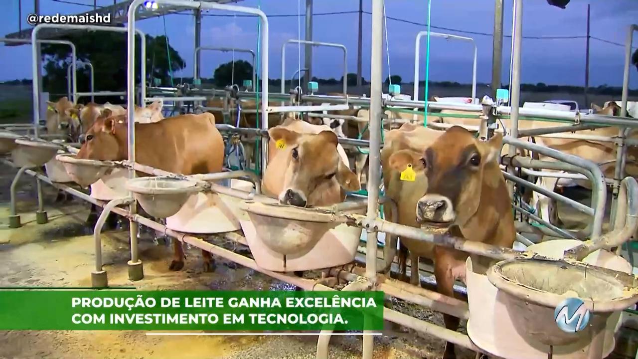 Produção de leite ganha excelência com investimento em tecnologia