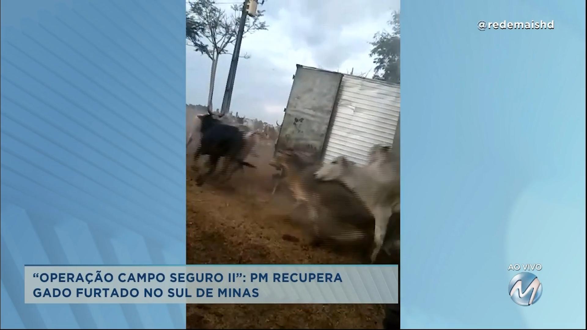 Em baú de caminhão: PM recupera gado furtado