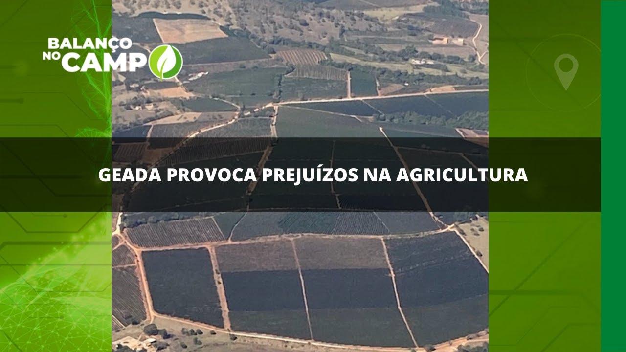 Geada provoca prejuízos na agricultura