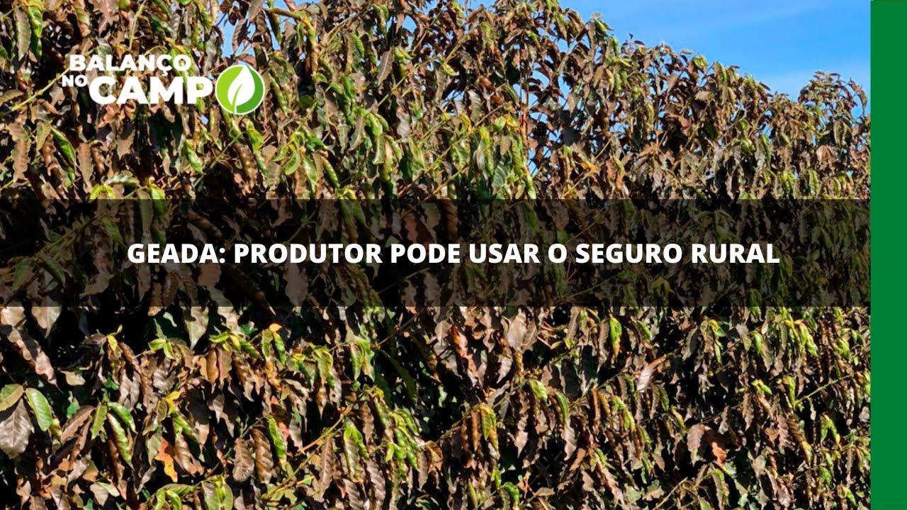Geada: produtor pode usar o seguro rural