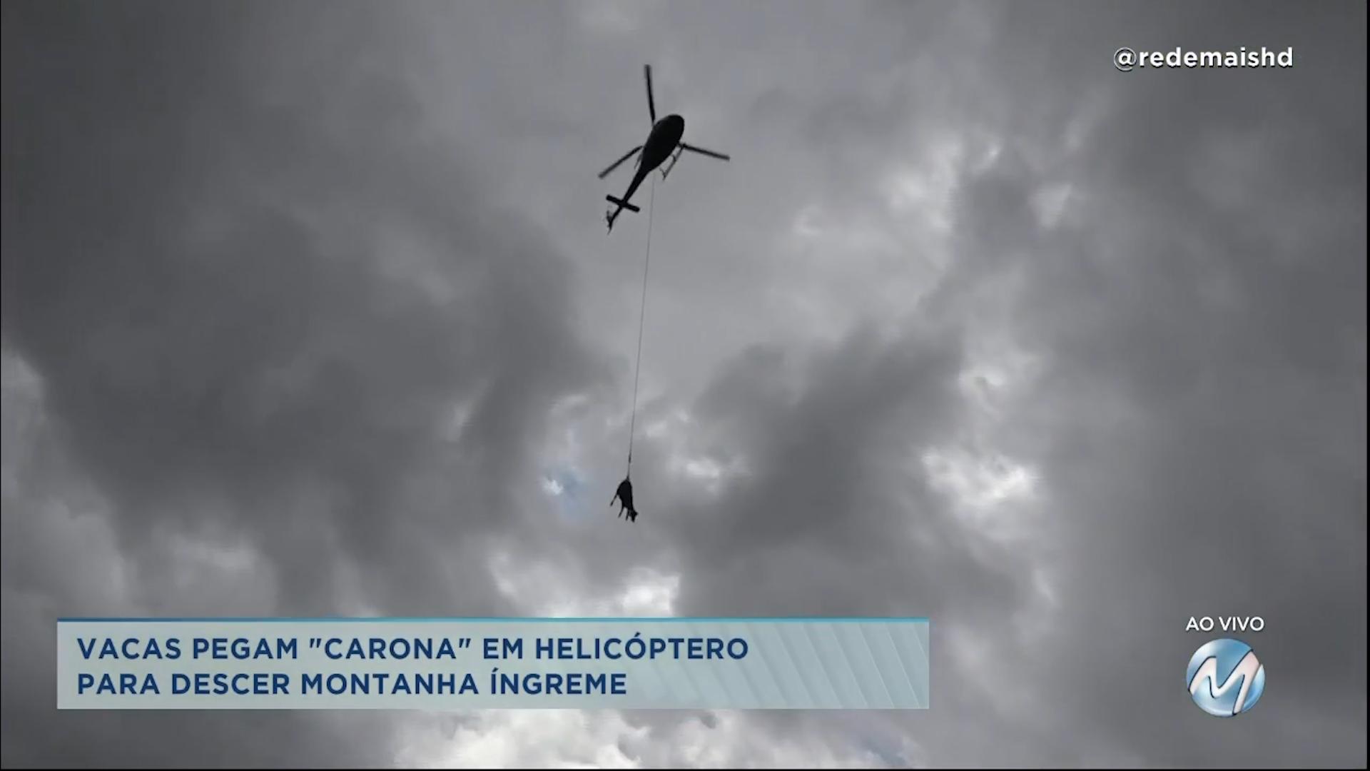 """Vacas pegam """"carona"""" em helicóptero para descer montanha íngreme"""
