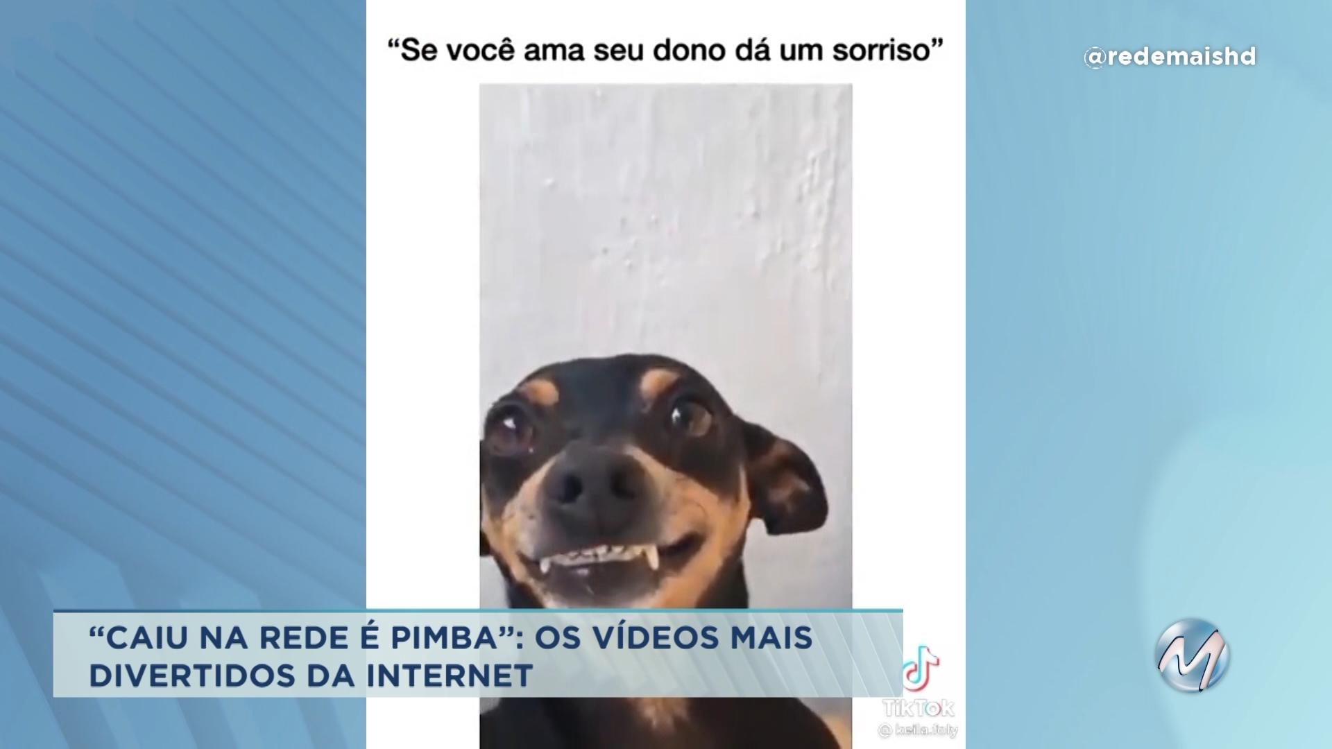 """""""Caiu na rede é pimba"""": os vídeos mais engraçados da internet"""
