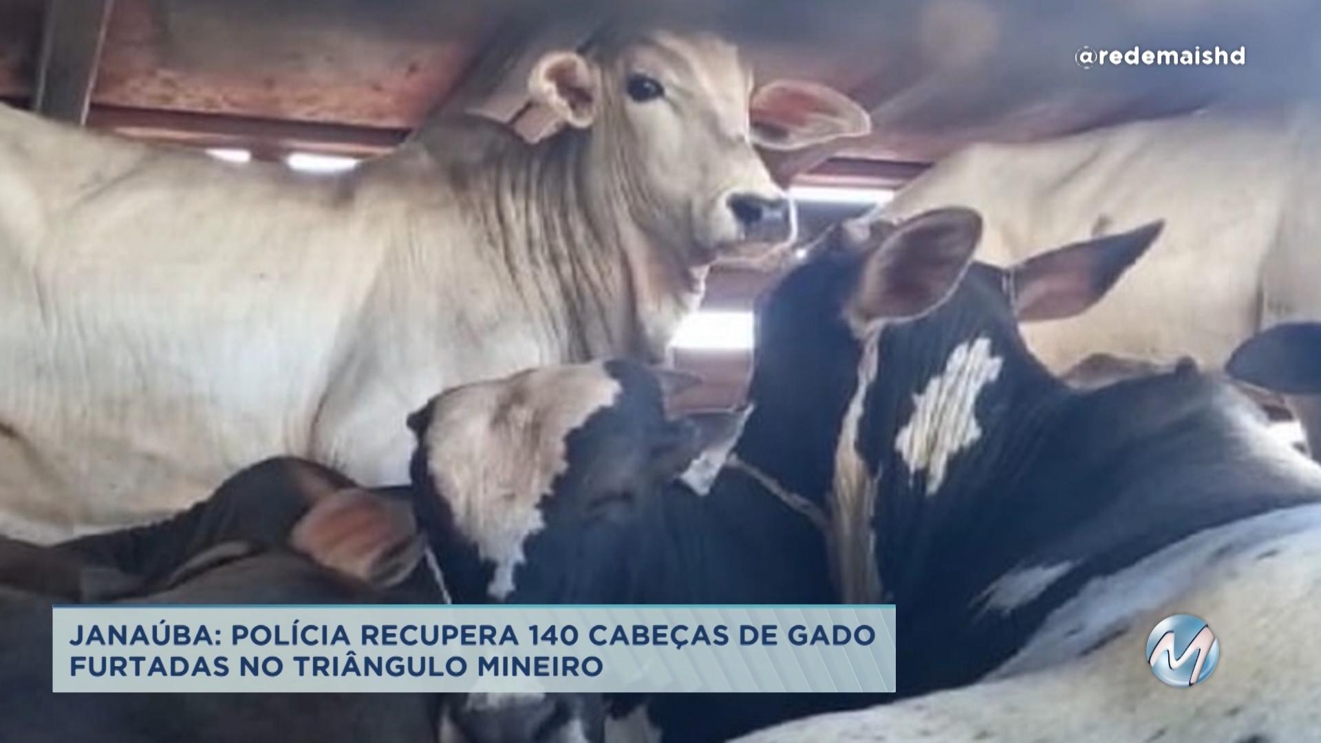 Janaúba: polícia recupera 140 cabeças de gado furtadas no triângulo mineiro