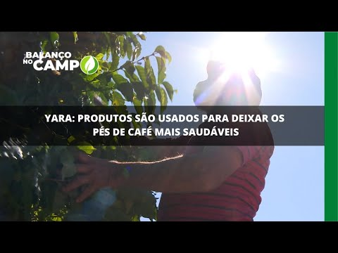 Yara: produtos são usados para deixar os pés de café mais saudáveis