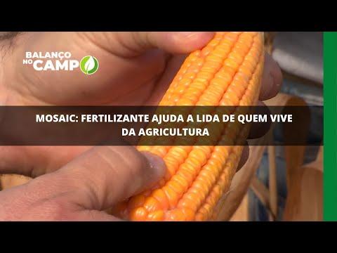 Mosaic: fertilizante ajuda a lida de quem vive da agricultura