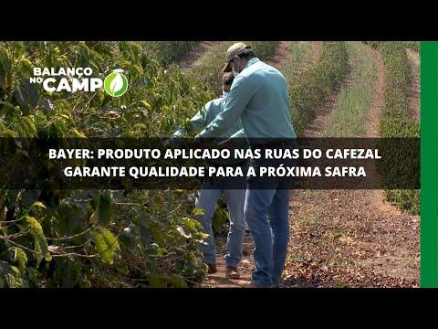 Bayer: produto aplicado nas ruas do cafezal garante qualidade para a próxima safra