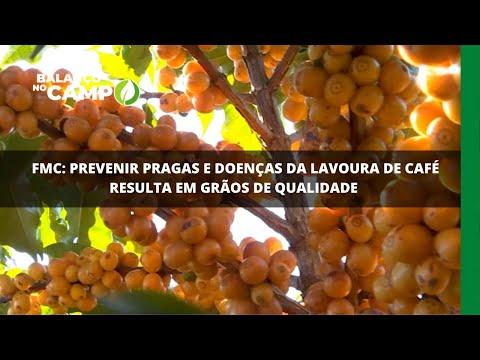 FMC: prevenir pragas e doenças da lavoura de café resulta em grãos de qualidade