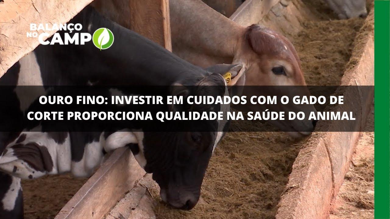 Ouro Fino: investir em cuidados com o gado de corte proporciona qualidade na saúde do animal