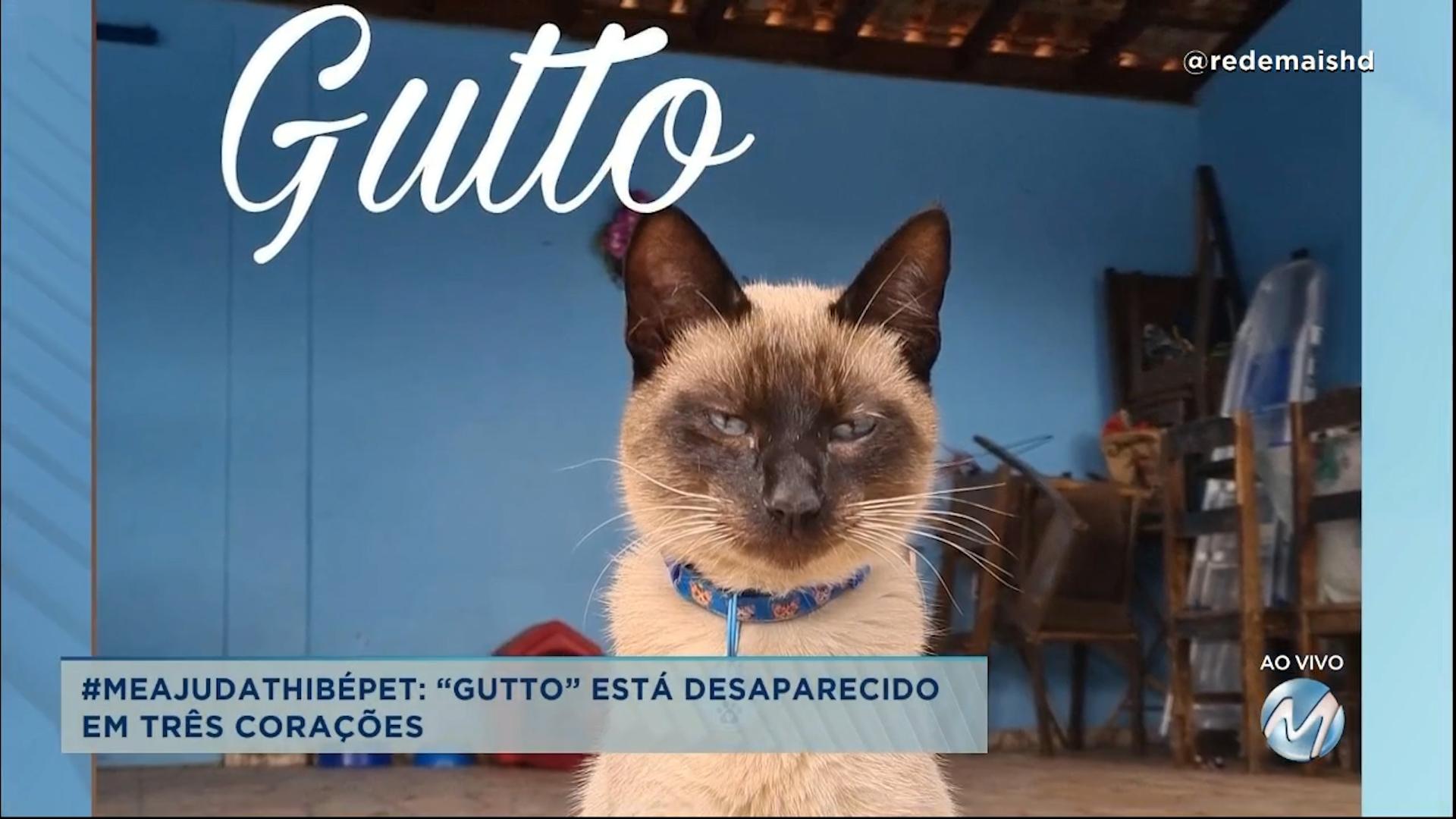 """#meajudathibépet: """"Gutto"""" está desaparecido em Três Corações"""