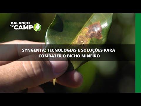 Syngenta: tecnologias e soluções para combater o bicho mineiro