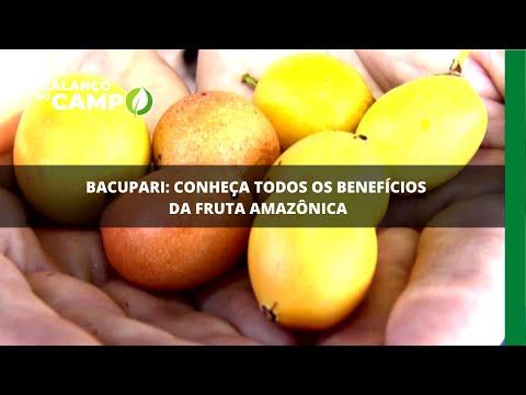 Bacupari: conheça todos os benefícios da fruta amazônica