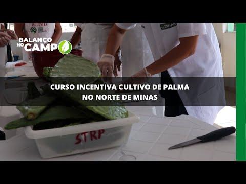 Curso incentiva cultivo de palma no Norte de Minas