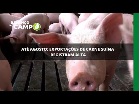 Até agosto: exportações de carne suína registram alta