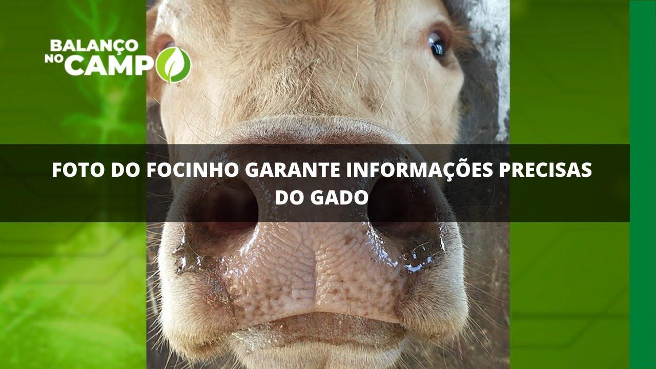 Foto do focinho garante informações precisas do gado