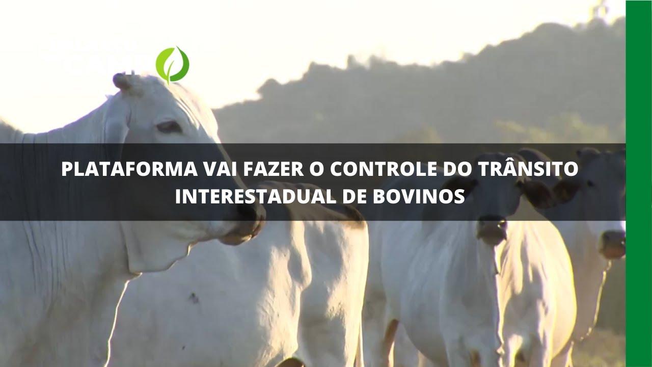 Plataforma vai fazer o controle do trânsito interestadual de bovinos