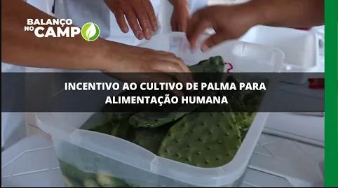 Incentivo ao cultivo de palma para alimentação humana