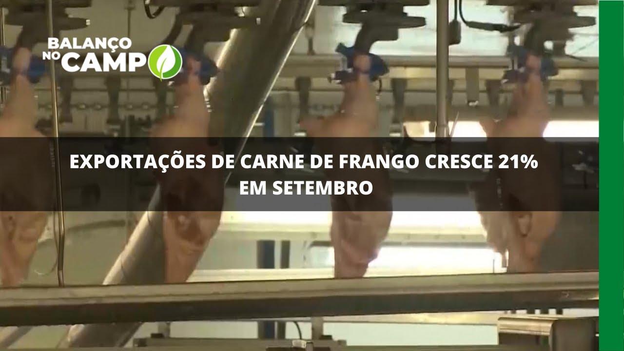 Exportações de carne de frango cresce 21% em setembro